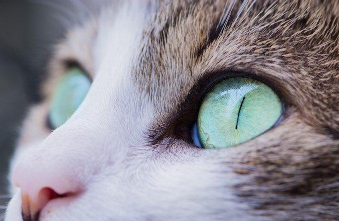 cats_eye