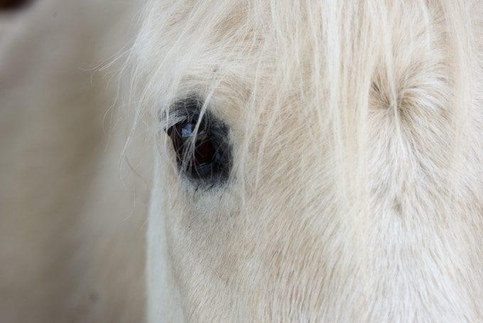 horse_eye