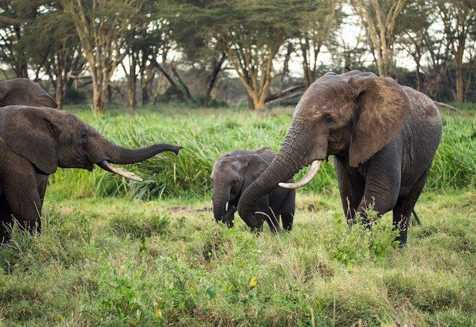 elephant_meets