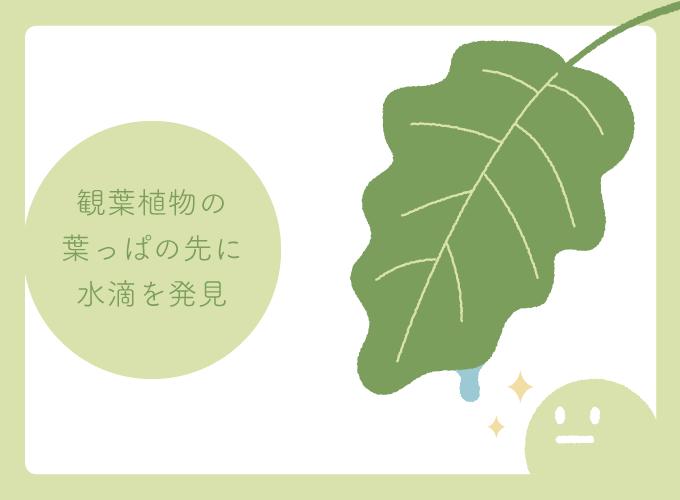 葉から水滴が出ているイラスト