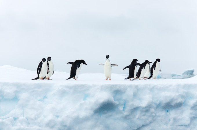 8羽のペンギン
