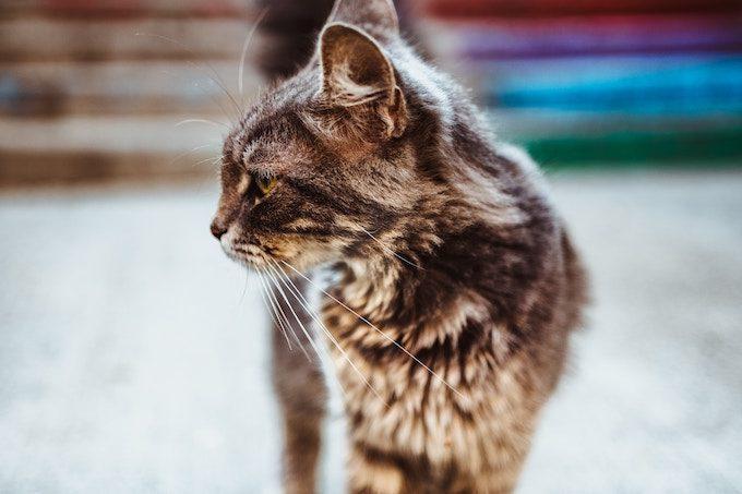 横を向いている猫