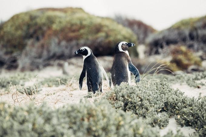 左右それぞれを向いている2羽のペンギン