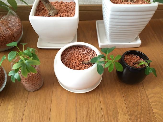 12月現在の観葉植物たちアップ3