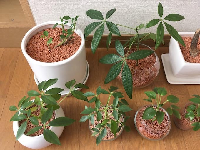 12月現在の観葉植物たちアップ1